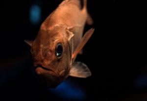 深海の生態系