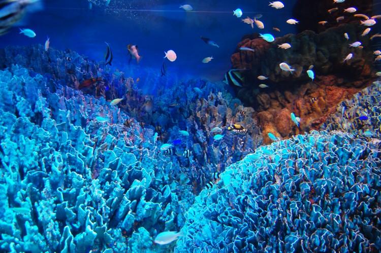 浅い海底の生態系
